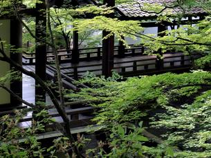 新緑の永観堂の写真素材 [FYI03216724]