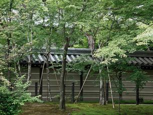 新緑の永観堂の写真素材 [FYI03216734]