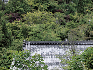新緑の永観堂の写真素材 [FYI03216735]
