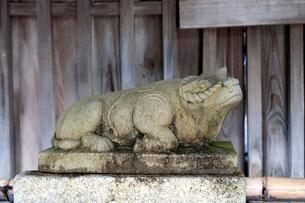 北野天満宮の手水舎の写真素材 [FYI03216759]