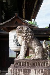三光門前の阿形の獅子の写真素材 [FYI03216761]