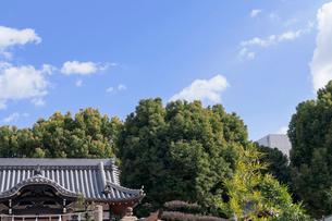 青空と神社の写真素材 [FYI03216788]