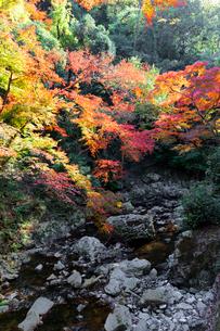 箕面川と紅葉の写真素材 [FYI03216840]