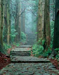 那智山大門坂 霧の熊野古道の写真素材 [FYI03216843]