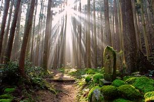 熊野古道大雲取越朝日の光芒の写真素材 [FYI03216850]