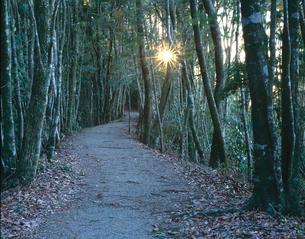 熊野古道中辺路 逢坂峠の夕陽の写真素材 [FYI03216868]