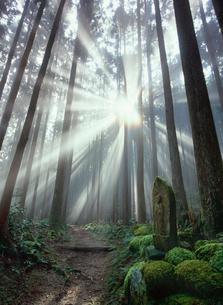 熊野古道大雲取越 朝日の光芒の写真素材 [FYI03216923]