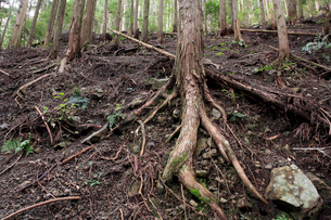 荒廃した森林 表土流出の写真素材 [FYI03216946]