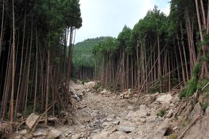 荒廃した森林 林地の土石流の写真素材 [FYI03216952]