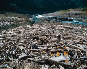 荒廃した森林 川岸に集積した流木の写真素材 [FYI03216977]