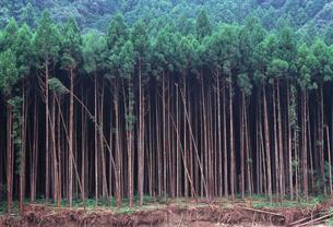 荒廃した森林の写真素材 [FYI03216979]