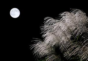 名月の写真素材 [FYI03217057]