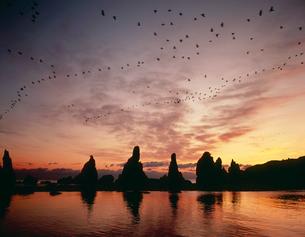 夜明けの橋杭岩の写真素材 [FYI03217080]