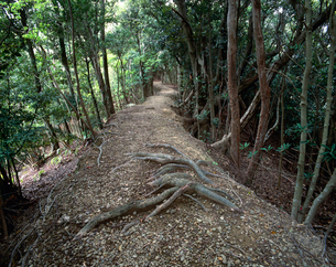 熊野古道長井坂の段築の写真素材 [FYI03217110]
