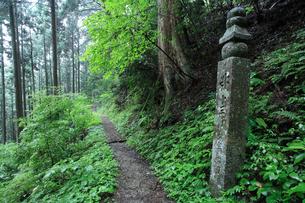 高野山町石道の写真素材 [FYI03217136]