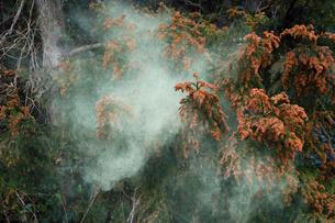スギ花粉の飛散の写真素材 [FYI03217138]