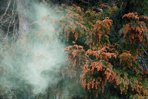 スギ花粉の飛散の写真素材 [FYI03217140]