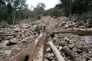 台風12号により土石流が起きた那智原始林の写真素材 [FYI03217178]