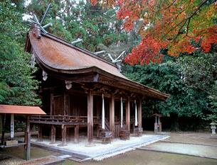 熊野三所大神社の写真素材 [FYI03217343]