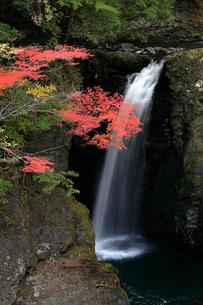 高野大滝の紅葉の写真素材 [FYI03217362]