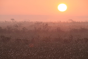 ワタスゲの霧多布湿原に昇る朝日の写真素材 [FYI03217519]