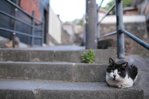 階段で休む猫の写真素材 [FYI03217521]
