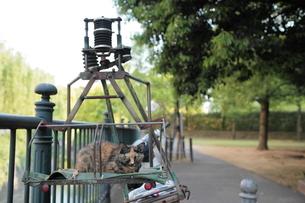 バイクの荷台で休む猫の写真素材 [FYI03217528]