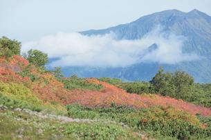 赤岳登山コース紅葉の写真素材 [FYI03217620]