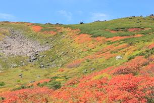 赤岳登山コース紅葉の写真素材 [FYI03217632]