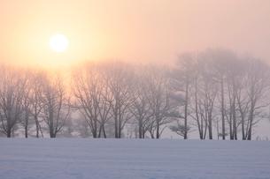 霧氷と朝もやの中の日の出の写真素材 [FYI03217711]