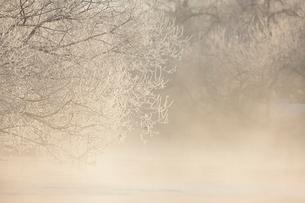 霧氷と気嵐の写真素材 [FYI03217877]