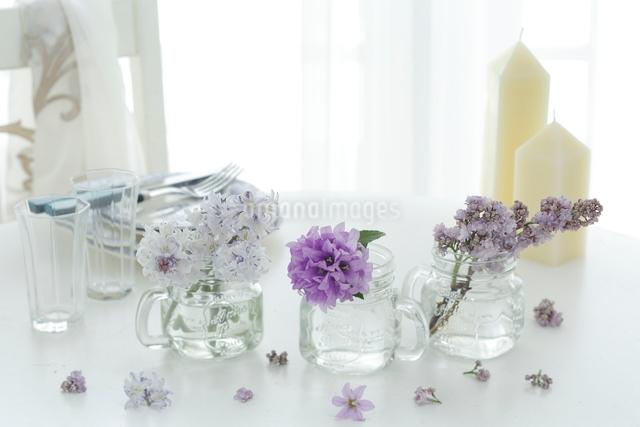 ガラス花器に生けられた紫の花の写真素材 [FYI03219013]