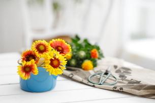 ブルーのコップに生けられた花の写真素材 [FYI03219014]