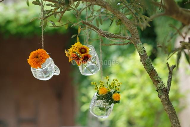黄色い花の写真素材 [FYI03219020]