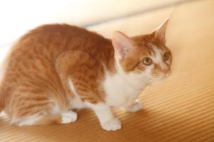 我が家の猫の写真素材 [FYI03219361]