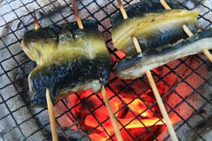 紀州備長炭で焼く天然ウナギの写真素材 [FYI03219370]