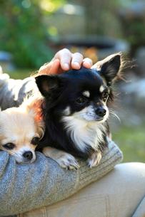 女性に抱かれた子犬の写真素材 [FYI03219374]