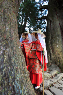 大門坂の夫婦杉をなでる平安衣装をまとった女性の写真素材 [FYI03219392]