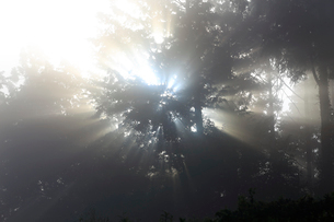 古道から見る木立の光芒の写真素材 [FYI03219422]