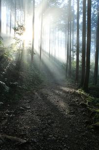 光芒が差し込む熊野古道の写真素材 [FYI03219425]