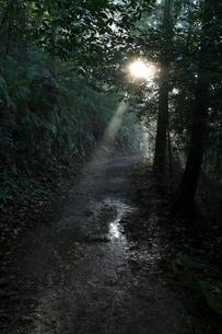 光芒が差し込む熊野古道の写真素材 [FYI03219426]