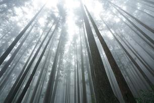 熊野古道の森を包む霧の写真素材 [FYI03219427]