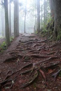 雨上がりの中辺路の写真素材 [FYI03219429]