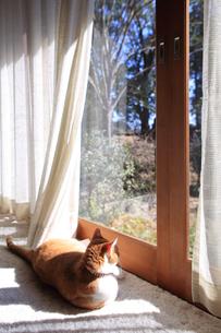 縁側でくつろぐ猫の写真素材 [FYI03219474]