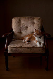 椅子の上でくつろぐ猫の写真素材 [FYI03219486]