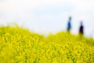 人々が散歩する菜の花が咲く荒川土手の写真素材 [FYI03219595]
