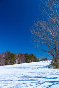 初春の菅平高原のスキー場の写真素材 [FYI03219694]