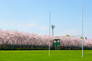 桜並木とラグビー場の写真素材 [FYI03219704]