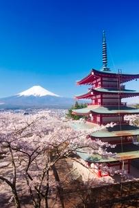 新倉山浅間公園から望む富士山と桜の写真素材 [FYI03219719]