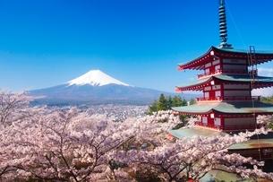 新倉山浅間公園から望む富士山と桜の写真素材 [FYI03219722]